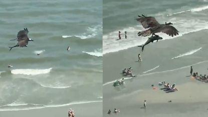 Niet te geloven: roofvogel vliegt over strand met een 'haai'