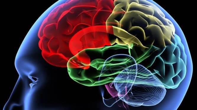 Internationaal onderzoek bevestigt: vorm van ons gezicht en brein zijn met elkaar gelinkt