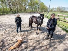 Stal de Eik in Holten kan niet op slot: 'Gezondheid en welzijn van paarden komt in geding'