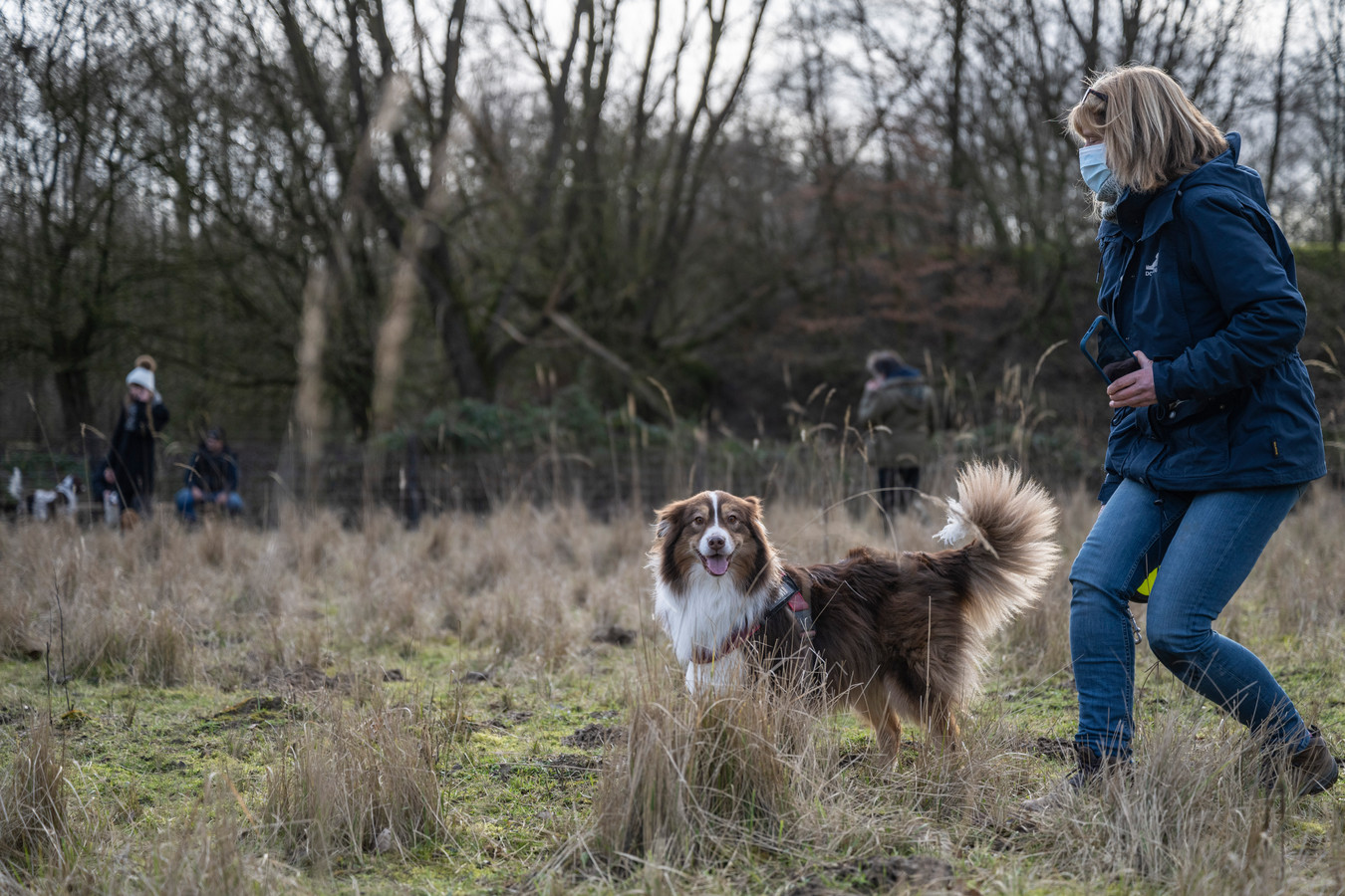 In een hondenweide kunnen honden binnen een afgebakend terrein vrij rondlopen.