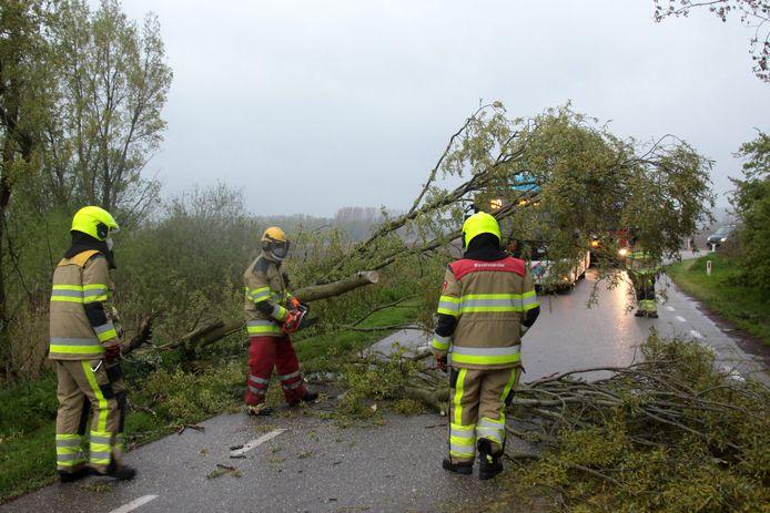 De omgewaaide boom in Erlecom.