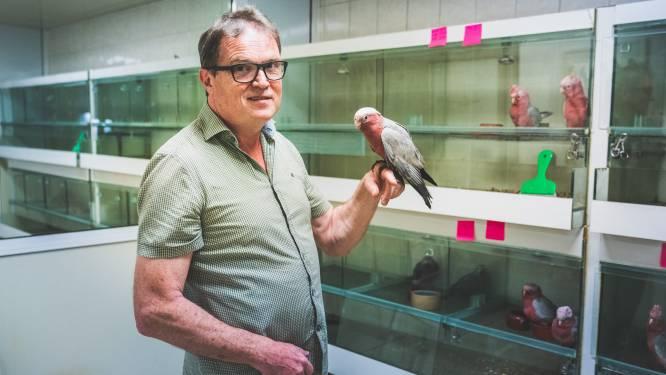 """Grootste papegaaienkwekerij van het land sluit de deuren: """"Aan de vraag ligt het zeker niet: onze vogels zijn nog even populair"""""""