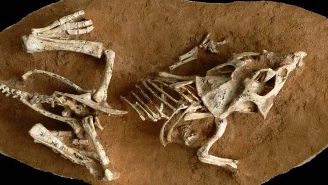 Dinosaurussen hadden maanden nodig om uit het ei te komen. En dat zou hen wel eens fataal geworden kunnen zijn