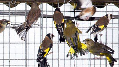 Nieuwerkerkenaar (57) riskeert boete voor bezit van vogelkooi