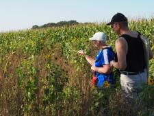Wie telt er mee om te zien of Sallandse boeren al meer kruiden en vlinders naar hun akkers lokken?