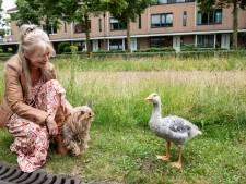 Yvonne uit Oosterhout is ontroostbaar na overlijden gansje Krumel: 'Ik mis hem zó'