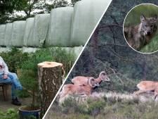Nieuws gemist? Moeflons tóch het haasje in Nationaal Park? En: huisbaas heeft de balen van huurder