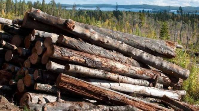 Ikea kapt in eeuwenoude bossen