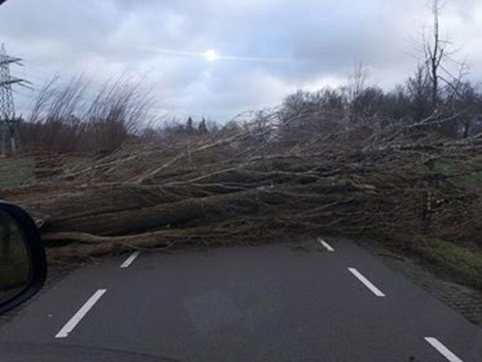 De Collseweg tussen Eindhoven en Nuenen is compleet afgesloten nadat er een boom is omgewaaid.