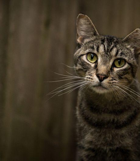 Un Français retrouve sa chatte en Suisse, quatre ans après l'avoir perdue en Italie