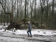 Doorwerth treurt: de eeuwenoude Kapelleboom is gevallen