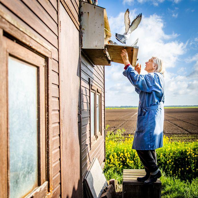 """Duivenmelker Alie Vermaas-Zevenbergen (78) geniet van haar dieren: ,,Ik vind het leuk als ze aan je handen hangen en op je rug of hoofd zitten."""""""