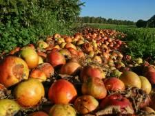Restjes prei of appel na de oogst? Via app uit Helmond wordt dit niet weggegooid maar verwerkt tot voedsel