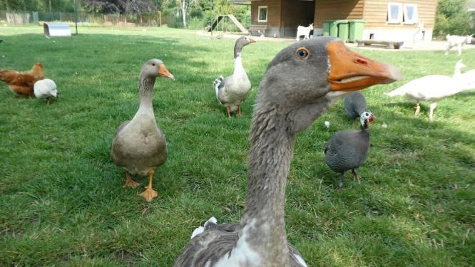 Beheerder dierenpark Veronica moet na jaren vrijwilligerswerk de biezen pakken