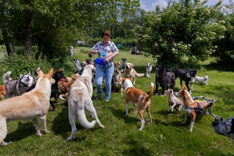 Alice van Duijn van het Dierentehuis in Almere vangt allerlei 'niet-plaatsbare' dieren op. Beeld Herman Engbers