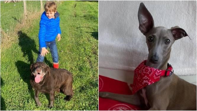 Vergiftigde honden Kamiel en Obi-Wan worden verder onderzocht, politie roept op tot waakzaamheid