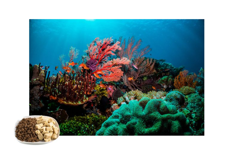 Vleesvervangers leiden tot minder CO2-uitstoot, dus verschijnt een afbeelding van kleurrijk koraal. Beeld Getty