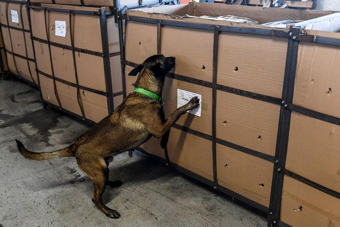 Een drugshond onderzoekt een lading.