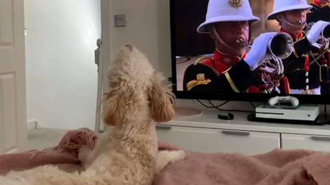 Hondje Reben neemt huilend afscheid van Prins Philip
