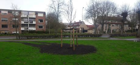 Anne Frankboom in Veenendaal is al geplant, officieel moment volgt in april