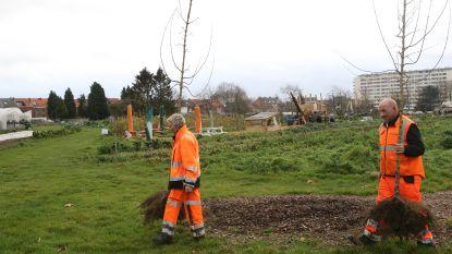 Nieuwe bomen geplant op de site van het RZ Tienen