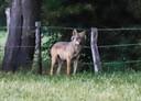 Een foto van de wolf in Duffel