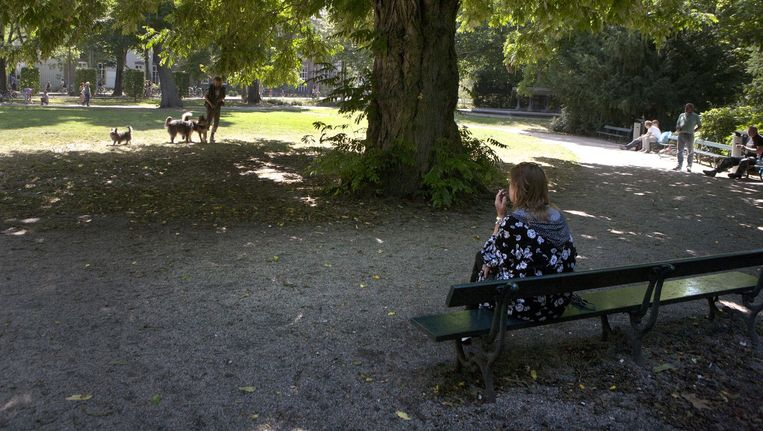 Het Wertheimpark, volgens het Auschwitz Comité de aangewezen plek voor het namenmonument. Beeld Floris Lok
