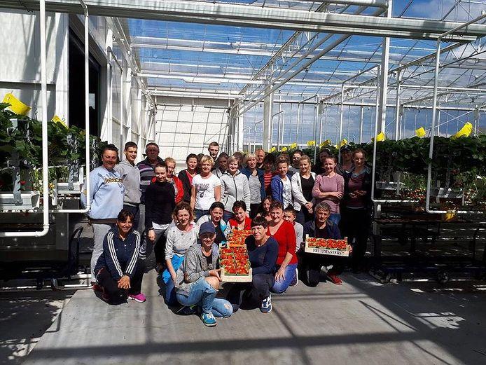 Werknemers van Scheffers, voornamelijk arbeidsmigranten uit Polen, in de aardbeienkas aan de Oliviersweg in Oisterwijk