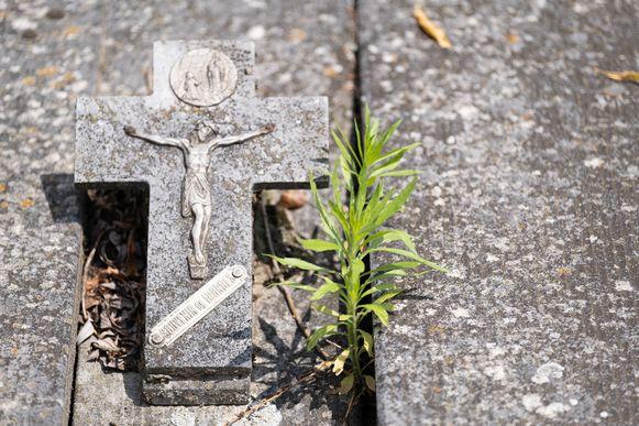 De begraafplaats van Nijlen is overwoekerd door onkruid