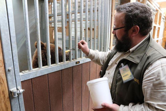 Verantwoordelijke Karel Ackaert voedt een van de beren in De Zonnegloed.