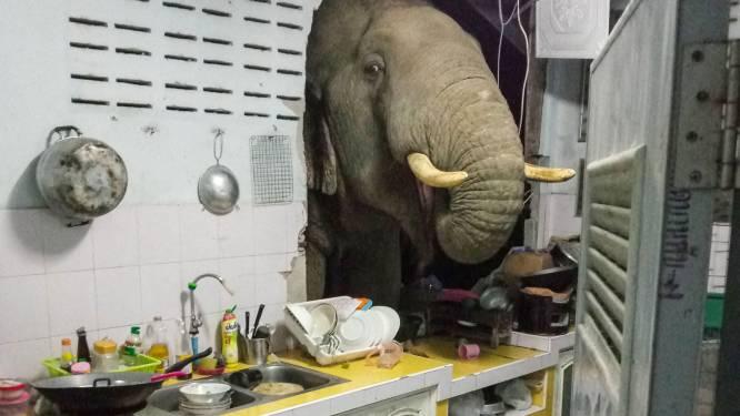Thais koppel krijgt bezoek van een olifant met een hongertje