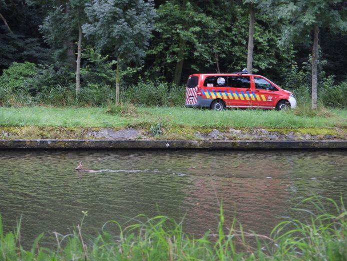Een ree raakte woensdagmorgen verzeild in het kanaal Brugge-Oostende.