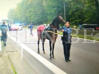 Er staat een paard op de Brusselse ring