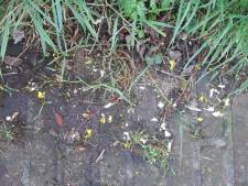 Opruim-estafette om duizenden stukjes confetti uit het gras te halen: 'Zodat we eindelijk alles weg krijgen'