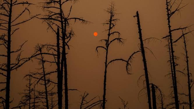 """""""Notre patrie brûle"""": En Sibérie, le changement climatique déchaîne les feux de forêts"""