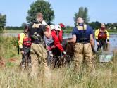 Koe die 100 kilometer werd meegevoerd door de Maas maakt het goed 'en zal nooit worden geslacht'