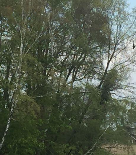 Dode vogel aan een tak op een onmogelijke plek in Hengelo, wat doe je ermee?