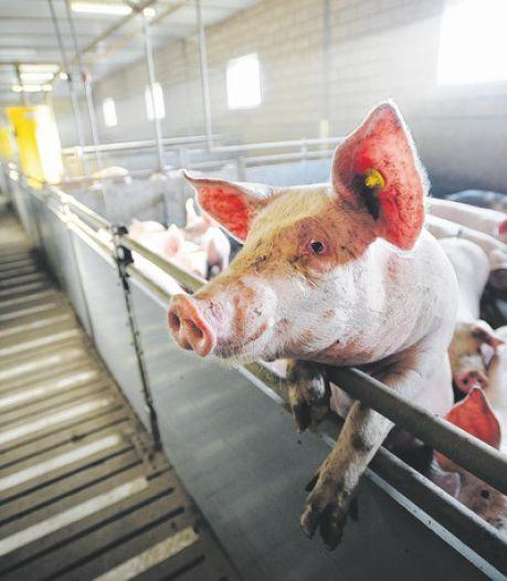 Vergunning voor bedrijf met 11.000 varkens in Creil onder vuur: 'Sloop van stallen'