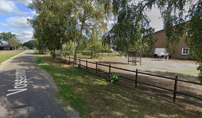Aan de Vossenhoorn, tussen Moergestel en Spoordonk, gaan stieren voor paarden wijken.