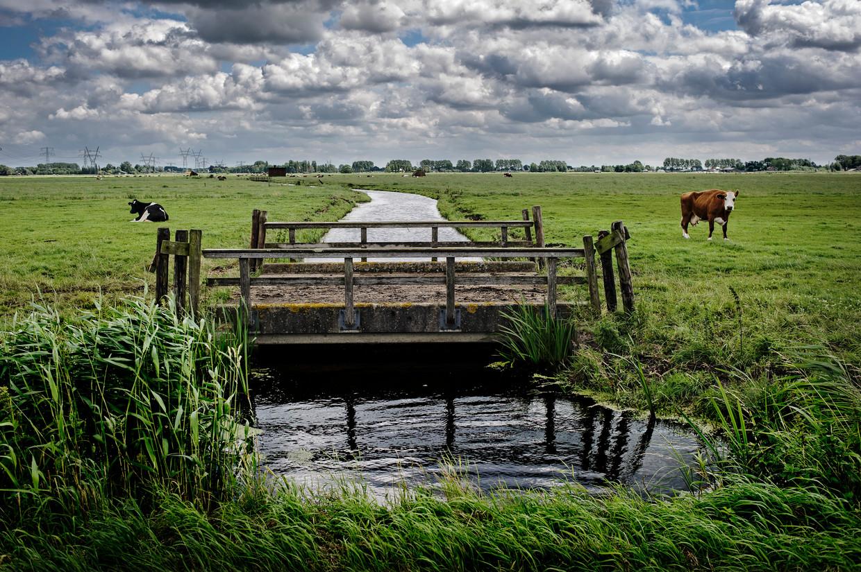 De Bloemendalerpolder, tussen Muiden en Weesp.
