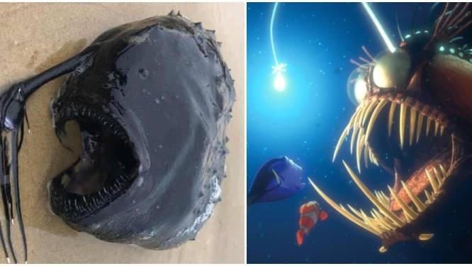 Monsterachtige diepzeevis met lampje uit 'Finding Nemo' spoelt aan op strand