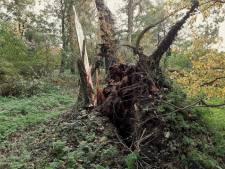 Ongeveer 70 jaar oude boom omgevallen in Park Merwestein