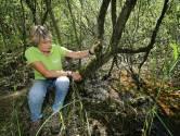 De Berk bloeit en groeit na natte lente, maar: 'De veengrond is bijna onomkeerbaar beschadigd'