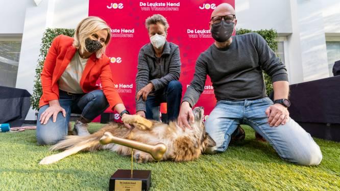 Unieke straathond Coada (11) verovert ieders hart met moed en is nu 'Leukste hond van Vlaanderen'