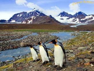 """Vrees voor ecologische ramp: wetenschappers plannen missie naar 's werelds grootste ijsberg, die nu echt op ramkoers ligt met """"pinguïneiland"""""""
