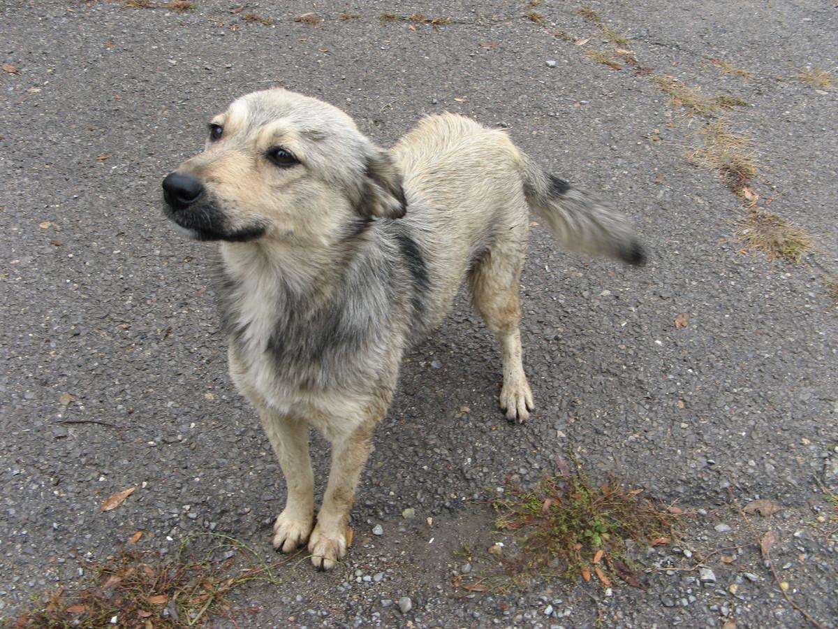 In Waalre wordt strenger gecontroleerd op loslopende honden.