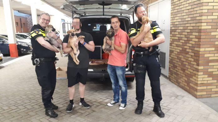 De vier puppy's zijn door de eigenaresse overgedragen aan de Westlandse wijkagent. Voor hen is elders opvang gevonden.