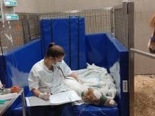Bo (22) werkt bij Nederlands enige 'intensive care voor veulentjes'