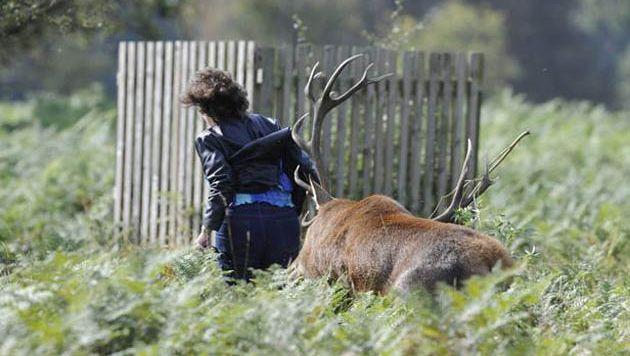 Une femme attaquée le 27 septembre dernier dans Bushy Park.