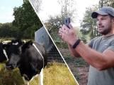 Deze koeien zijn zeldzamer dan panda's én terug in Twente